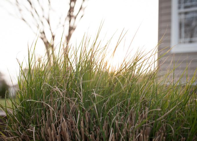 tall grass at golden hour